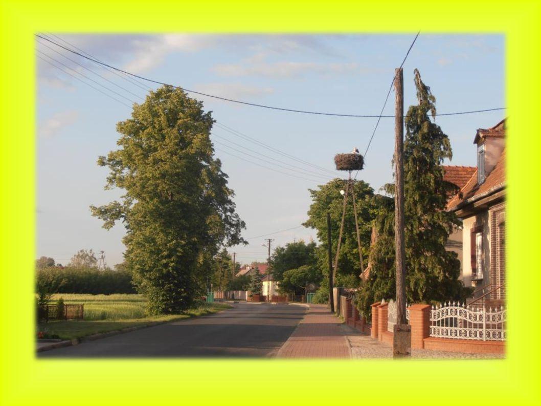 Razem 5 młodych bocianów Siedlec położenie gniazda: słup energetyczny z platfromą 2004 - 2 młode, nowo zbudowane gniazdo od 1 maja.