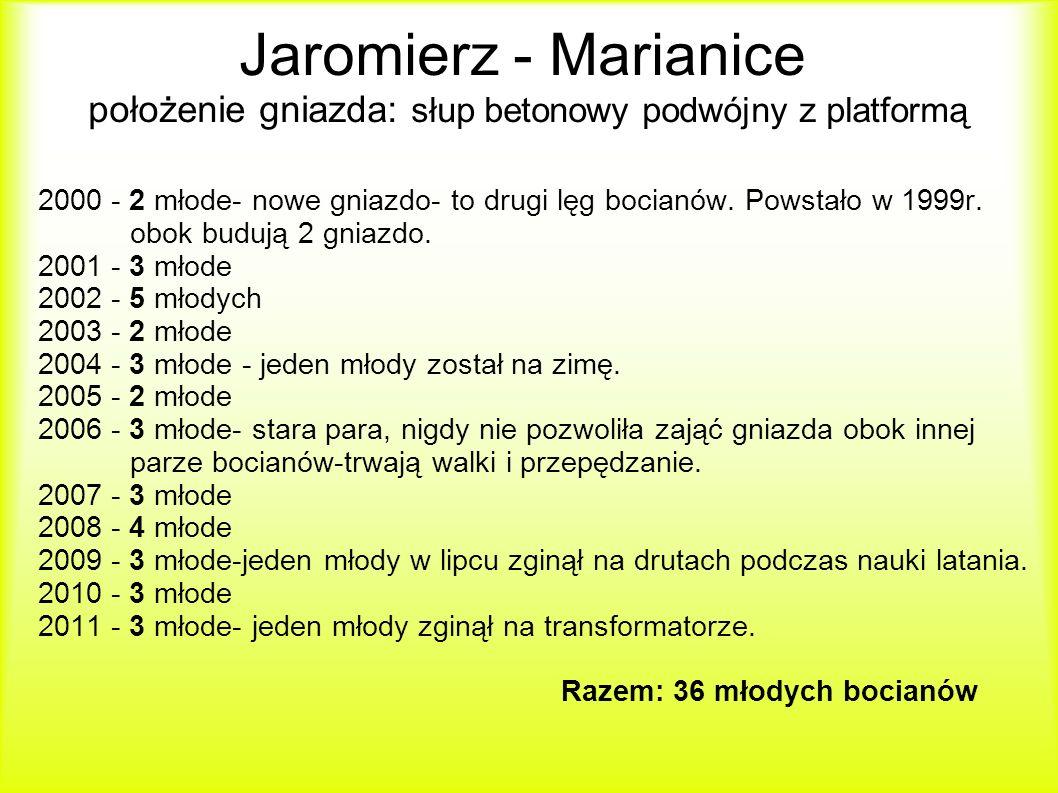 Jaromierz - Marianice położenie gniazda: słup betonowy podwójny z platformą 2000 - 2 młode- nowe gniazdo- to drugi lęg bocianów.