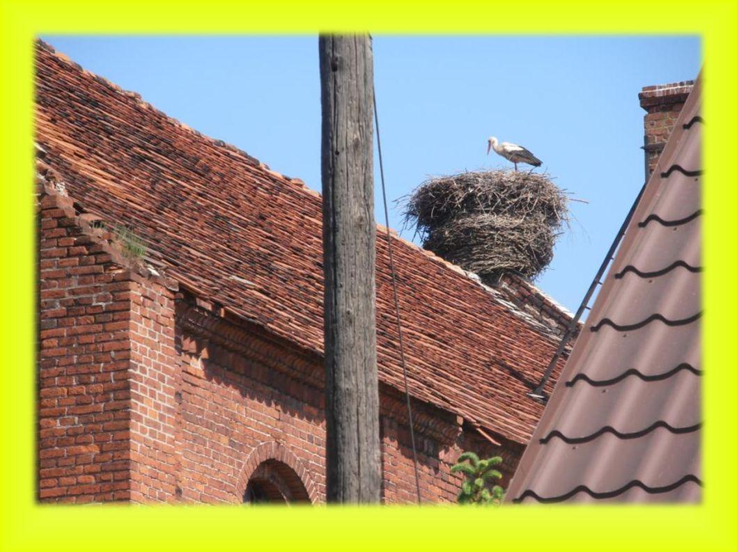 Kopanica położenie gniazda: słup betonowy energetyczny z platformą 2007- 0 młodych- para bocianów całe lato budowała nowe gniazdo.