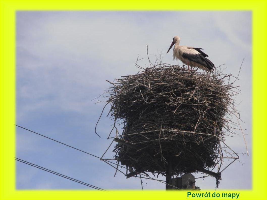 Mała Wieś położenie gniazda: słup betonowy z platformą 2000 - 1 młody - gniazdo na dachu budynku gospodarczego na konstrukcji drewnianej.