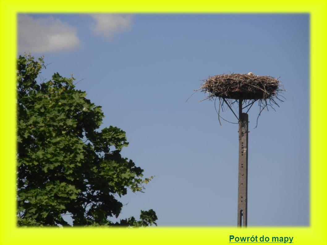 Jażyniec Położenie gniazda na betonowym słupie energetycznym – - potrójnym z platformą 2000 - 3 młode 2001 - 3 młode 2002 - 3 młode 2003 - 2 młode 2004 - 3 młode 2005 - 0 młodych -podczas walki o gniazdo wypadły 3 jaja.