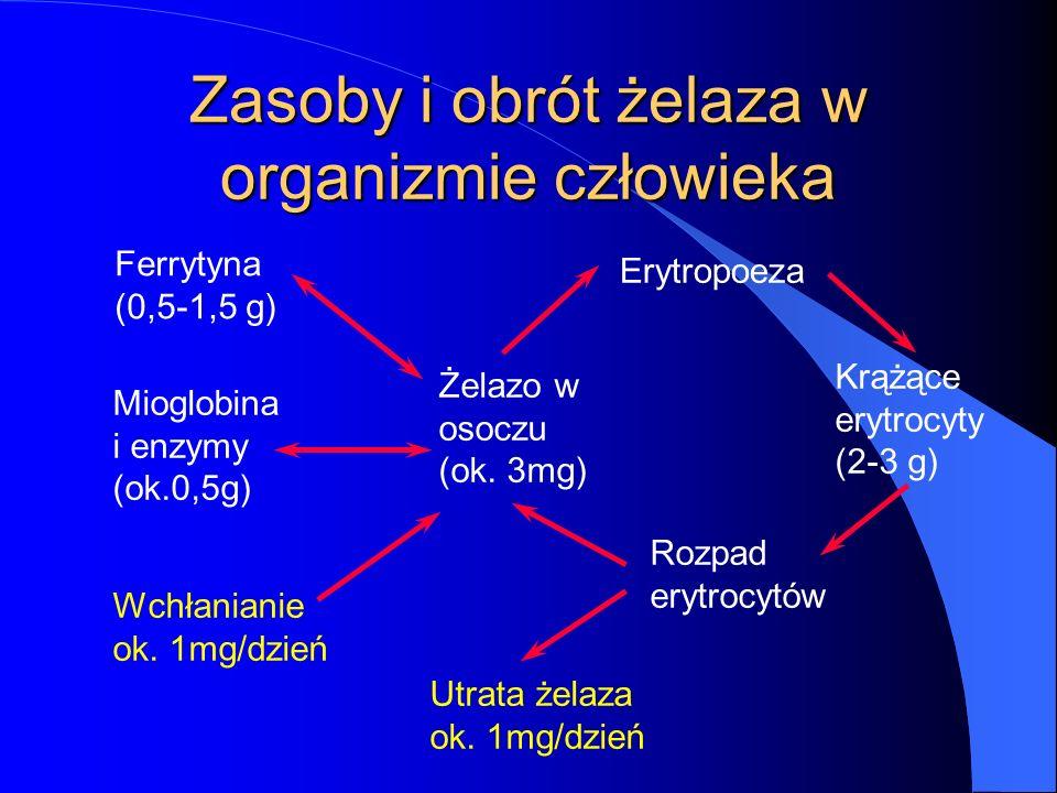 Zasoby i obrót żelaza w organizmie człowieka Ferrytyna (0,5-1,5 g) Mioglobina i enzymy (ok.0,5g) Wchłanianie ok. 1mg/dzień Żelazo w osoczu (ok. 3mg) E