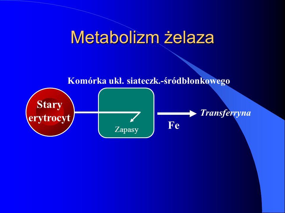 Zapasy Komórka ukł. siateczk.-śródbłonkowego Stary erytrocyt Metabolizm żelaza Fe Transferryna
