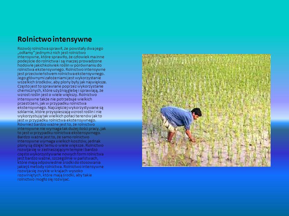 Rolnictwo intensywne Rozwój rolnictwa sprawił, że powstały dwa jego odłamy jednym z nich jest rolnictwo intensywne, które sprawiło, że człowiek ma inn