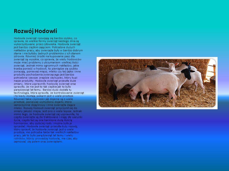 Rozwój Hodowli Hodowle zwierząt rozwijają się bardzo szybko, co sprawia, że wielkie fermy zwierząt każdego dnia są wykorzystywane przez człowieka. Hod