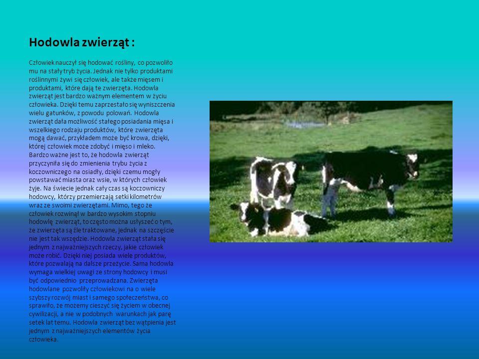 Rolnictwo a człowiek Człowiek jest zależny od rolnictwa.