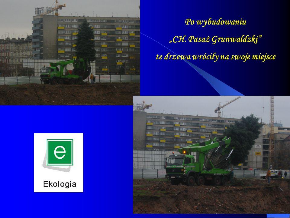 Po wybudowaniu CH. Pasaż Grunwaldzki te drzewa wróciły na swoje miejsce