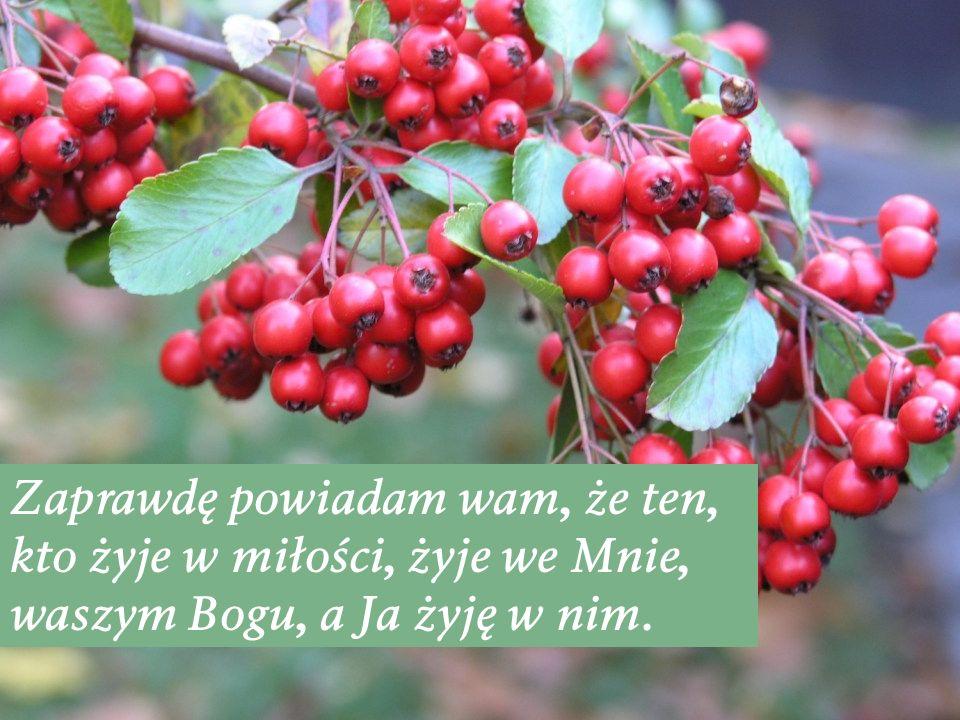 Zaprawdę powiadam wam, że ten, kto żyje w miłości, żyje we Mnie, waszym Bogu, a Ja żyję w nim.