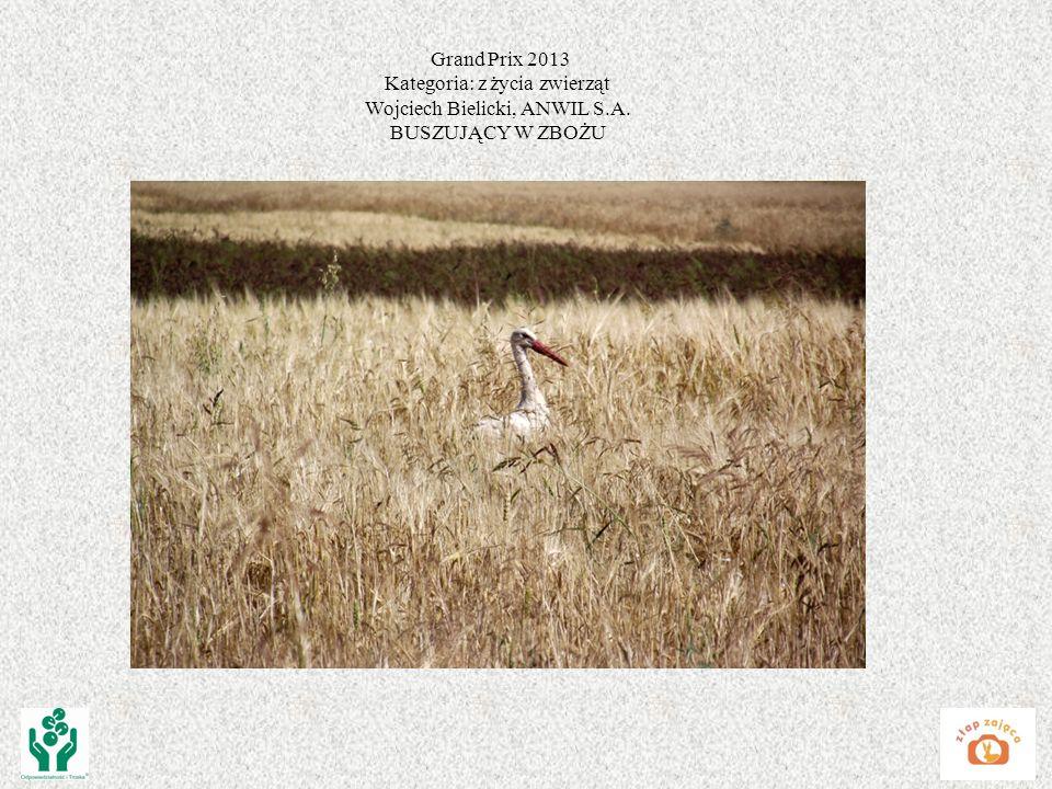 Grand Prix 2013 Kategoria: z życia zwierząt Wojciech Bielicki, ANWIL S.A. BUSZUJĄCY W ZBOŻU