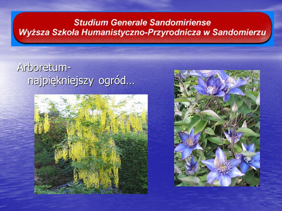 Arboretum- najpiękniejszy ogród…