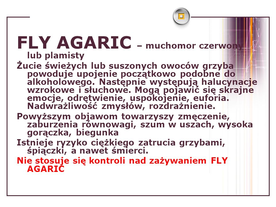 FLY AGARIC – muchomor czerwony lub plamisty Żucie świeżych lub suszonych owoców grzyba powoduje upojenie początkowo podobne do alkoholowego. Następnie