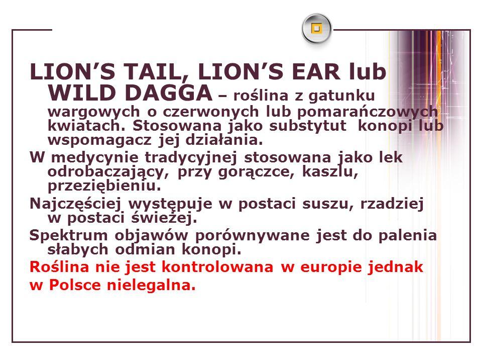 LIONS TAIL, LIONS EAR lub WILD DAGGA – roślina z gatunku wargowych o czerwonych lub pomarańczowych kwiatach. Stosowana jako substytut konopi lub wspom