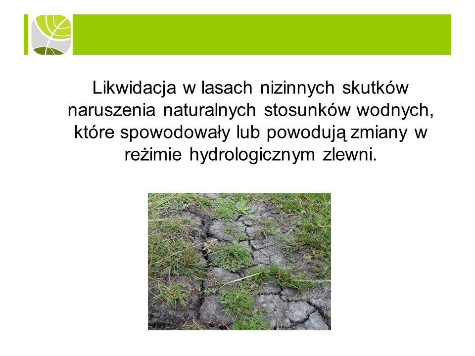 Likwidacja w lasach nizinnych skutków naruszenia naturalnych stosunków wodnych, które spowodowały lub powodują zmiany w reżimie hydrologicznym zlewni.