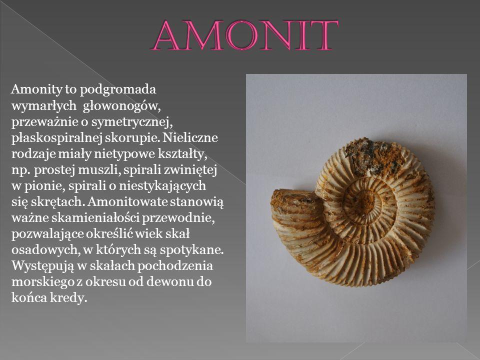 Amonit jest głównie wykorzystywany do wyrobu biżuterii.