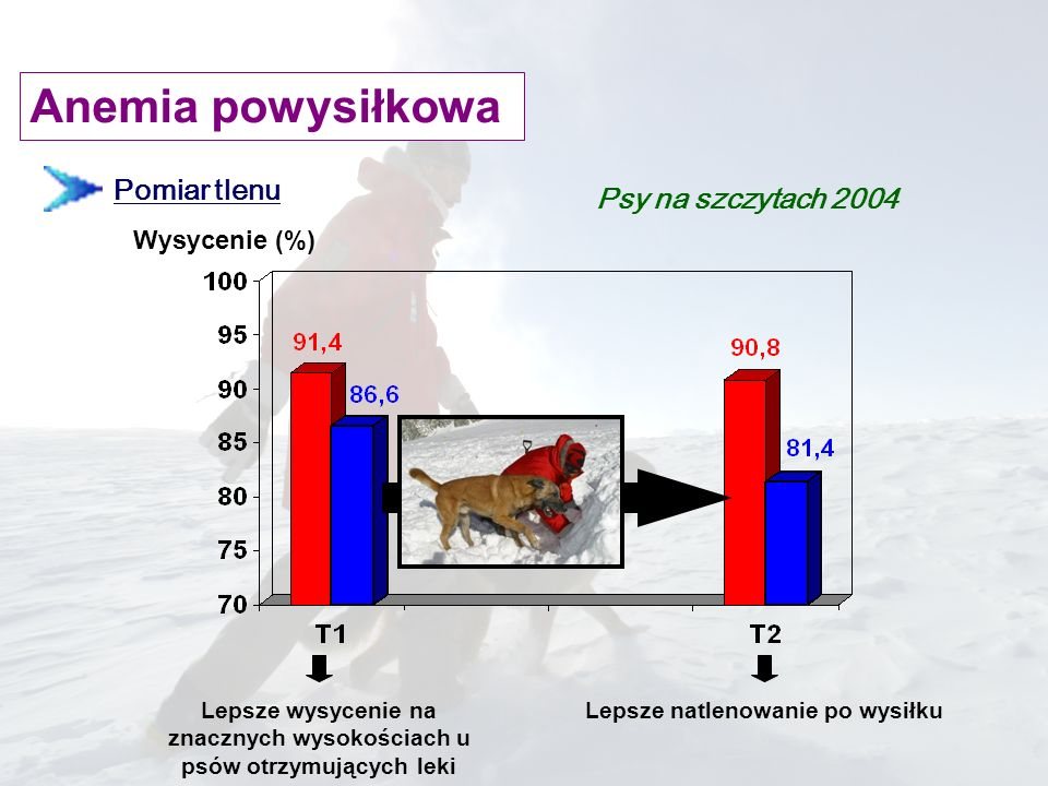 Pomiar tlenu Wysycenie (%) Lepsze wysycenie na znacznych wysokościach u psów otrzymujących leki Lepsze natlenowanie po wysiłku Psy na szczytach 2004 A