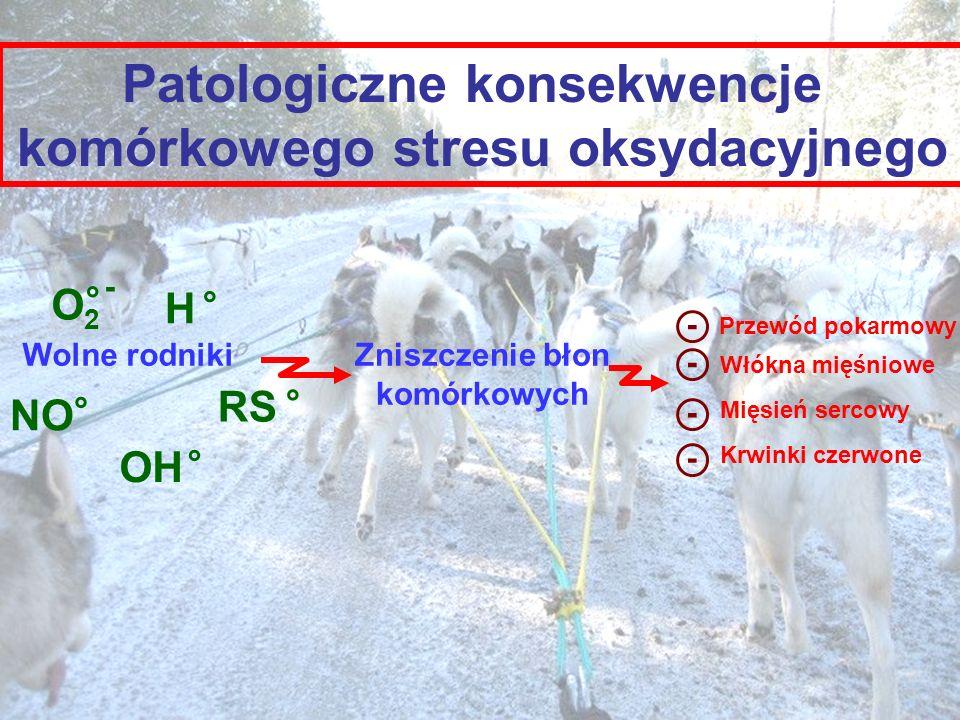 Patologiczne konsekwencje komórkowego stresu oksydacyjnego O2O2 ° - NO ° OH ° RS ° H ° Wolne rodnikiZniszczenie błon komórkowych Przewód pokarmowy Włó