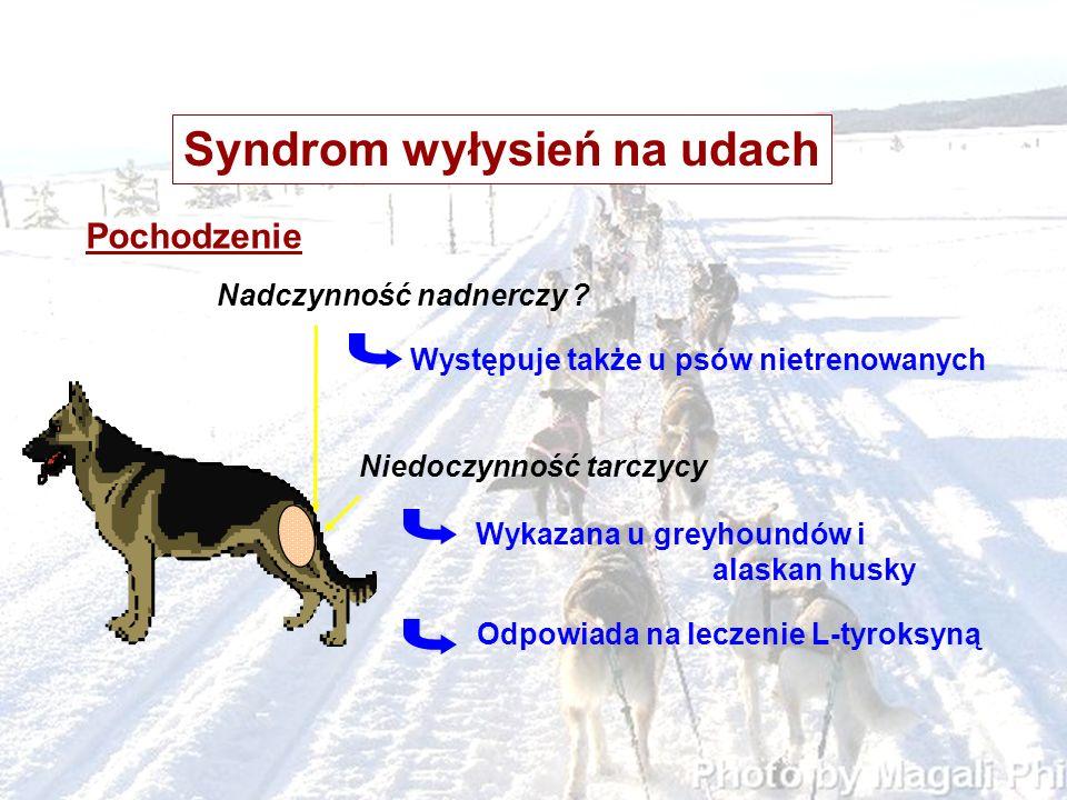 Syndrom wyłysień na udach Pochodzenie Nadczynność nadnerczy ? Niedoczynność tarczycy Wykazana u greyhoundów i alaskan husky Występuje także u psów nie