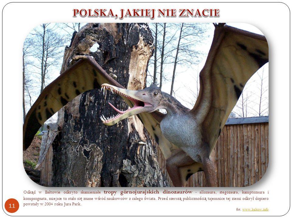 Odk ą d w Bałtowie odkryto skamieniałe tropy górnojurajskich dinozaurów - allozaura, stegozaura, kamptozaura i kompsognata, miejsce to stało si ę znane w ś ród naukowców z całego ś wiata.