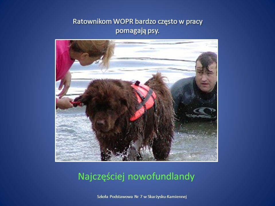 Najczęściej nowofundlandy Ratownikom WOPR bardzo często w pracy pomagają psy. Szkoła Podstawowa Nr 7 w Skarżysku-Kamiennej
