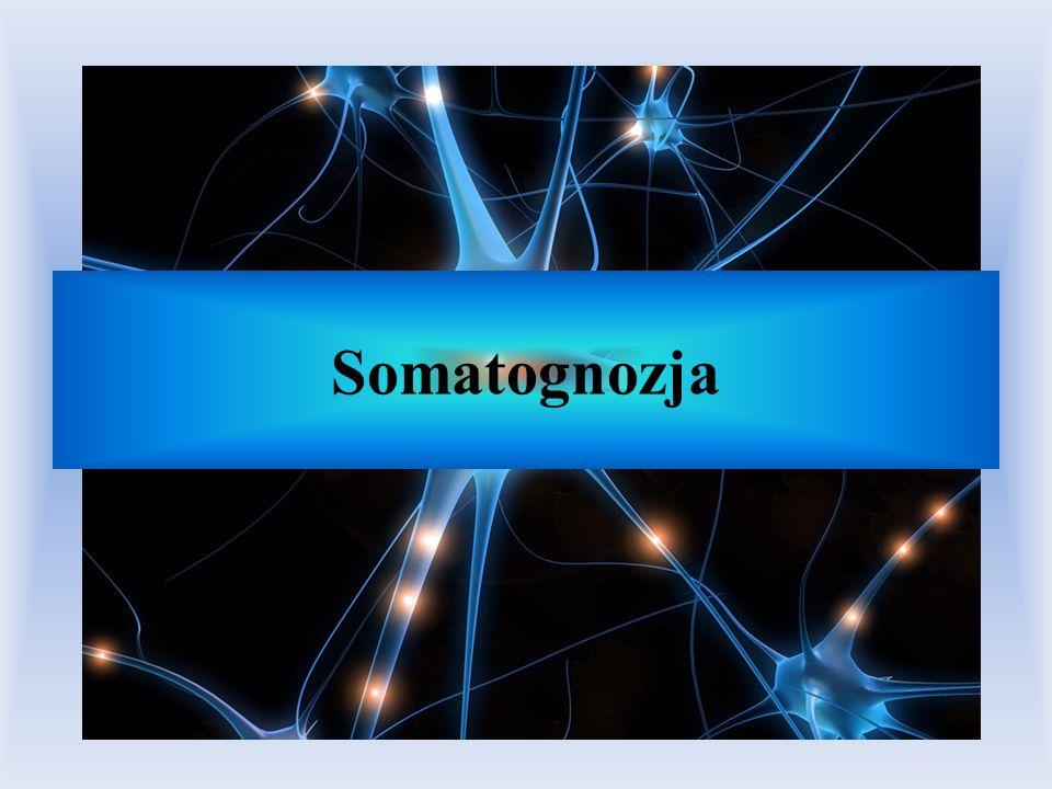 Somatognozja