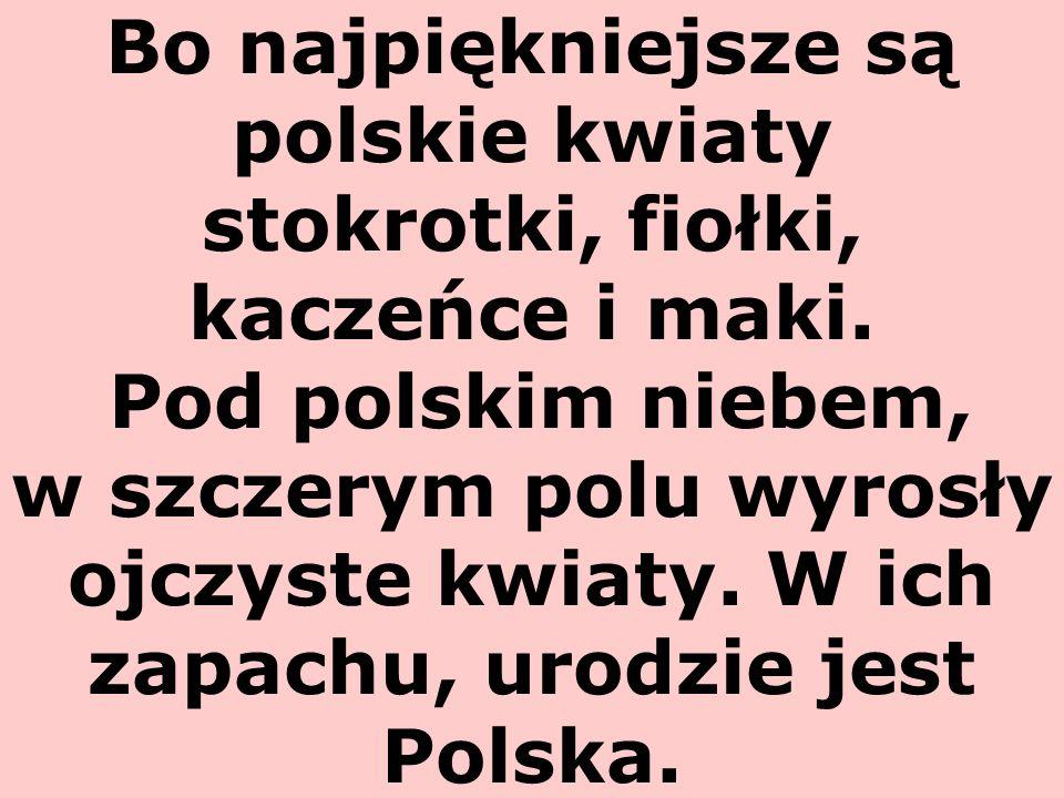 Bo najpiękniejsze są polskie kwiaty stokrotki, fiołki, kaczeńce i maki. Pod polskim niebem, w szczerym polu wyrosły ojczyste kwiaty. W ich zapachu, ur