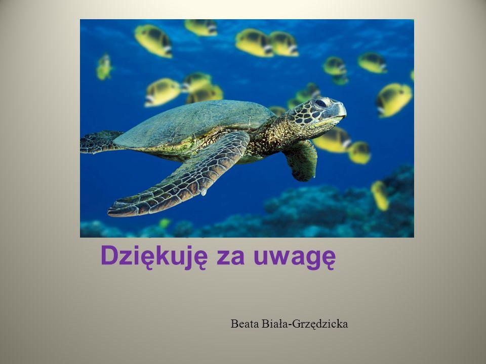 Dziękuję Państwu Dziękuję Państwuza Dziękuję za uwagę Beata Biała-Grzędzicka