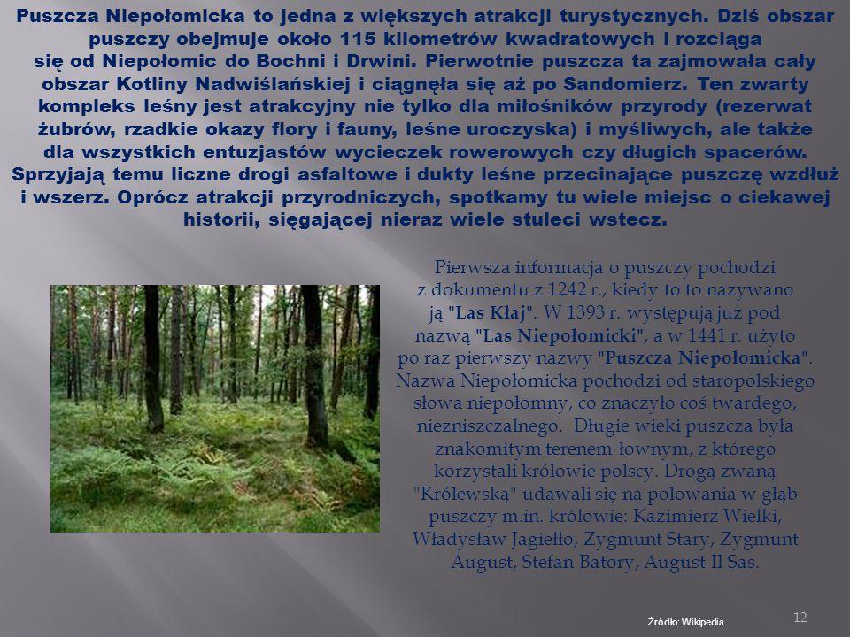 11 Zabierzów Bocheński leży bezpośrednio przy Puszczy Niepołomickiej. Mieszkańcy mają możliwość bliskiego kontaktu z naturą i zwierzętami Żródło: Goog