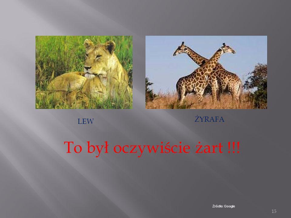 14 Inne zwierzęta żyjące w Puszczy Niepołomickiej DZIKJELEŃ LIS SARNA Żródło : Google