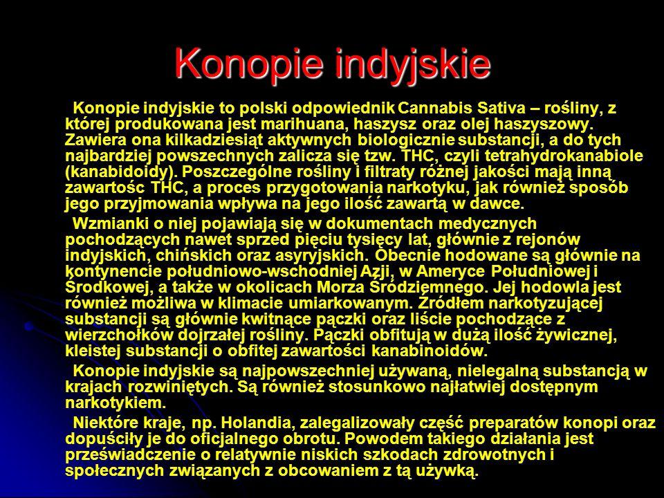 Konopie indyjskie Konopie indyjskie to polski odpowiednik Cannabis Sativa – rośliny, z której produkowana jest marihuana, haszysz oraz olej haszyszowy