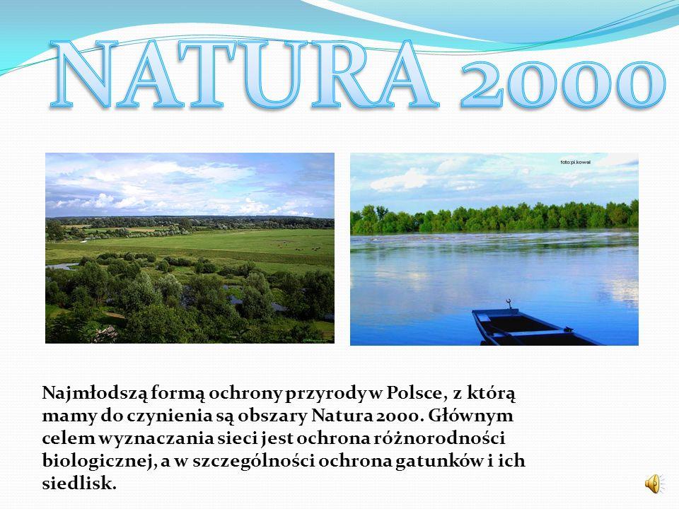 Najmłodszą formą ochrony przyrody w Polsce, z którą mamy do czynienia są obszary Natura 2000. Głównym celem wyznaczania sieci jest ochrona różnorodnoś