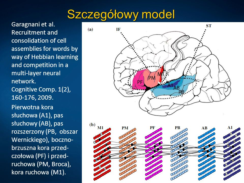 Szczegółowy model Garagnani et al. Recruitment and consolidation of cell assemblies for words by way of Hebbian learning and competition in a multi-la