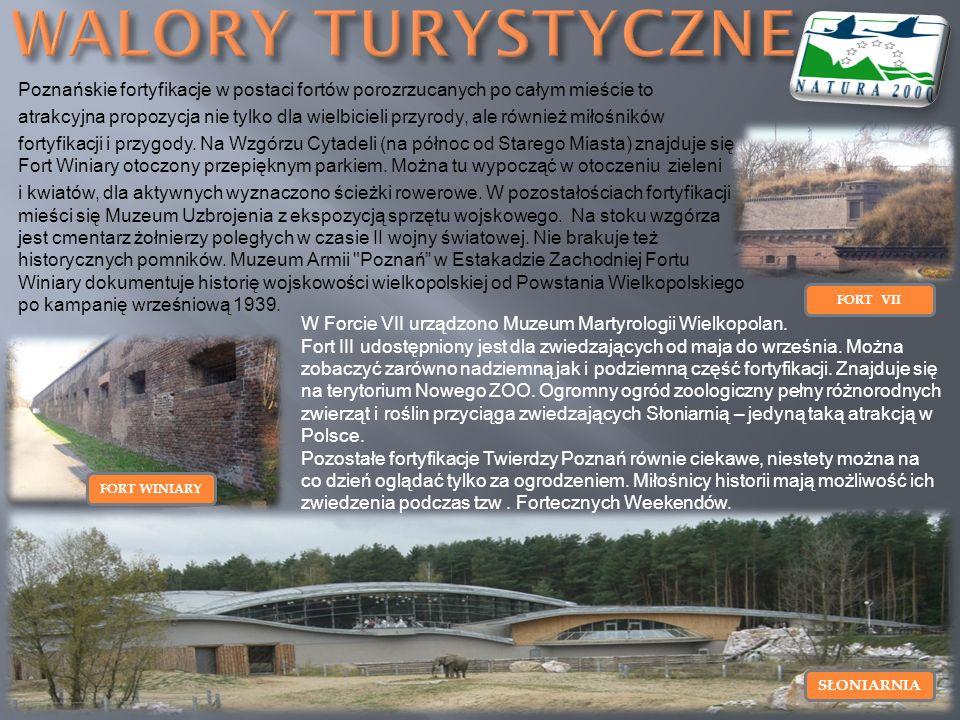 Poznańskie fortyfikacje w postaci fortów porozrzucanych po całym mieście to atrakcyjna propozycja nie tylko dla wielbicieli przyrody, ale również miło