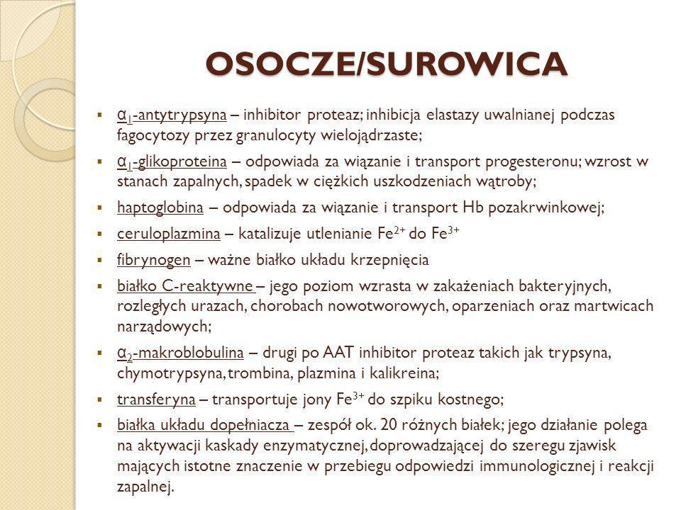 OSOCZE/SUROWICA α 1 -antytrypsyna – inhibitor proteaz; inhibicja elastazy uwalnianej podczas fagocytozy przez granulocyty wielojądrzaste; α 1 -glikopr