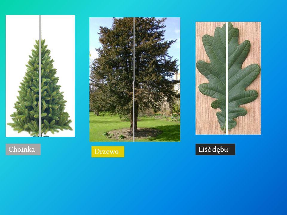 Choinka Drzewo Liść dębu