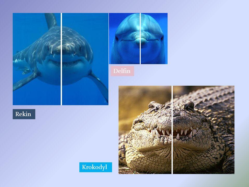 Rekin Krokodyl Delfin