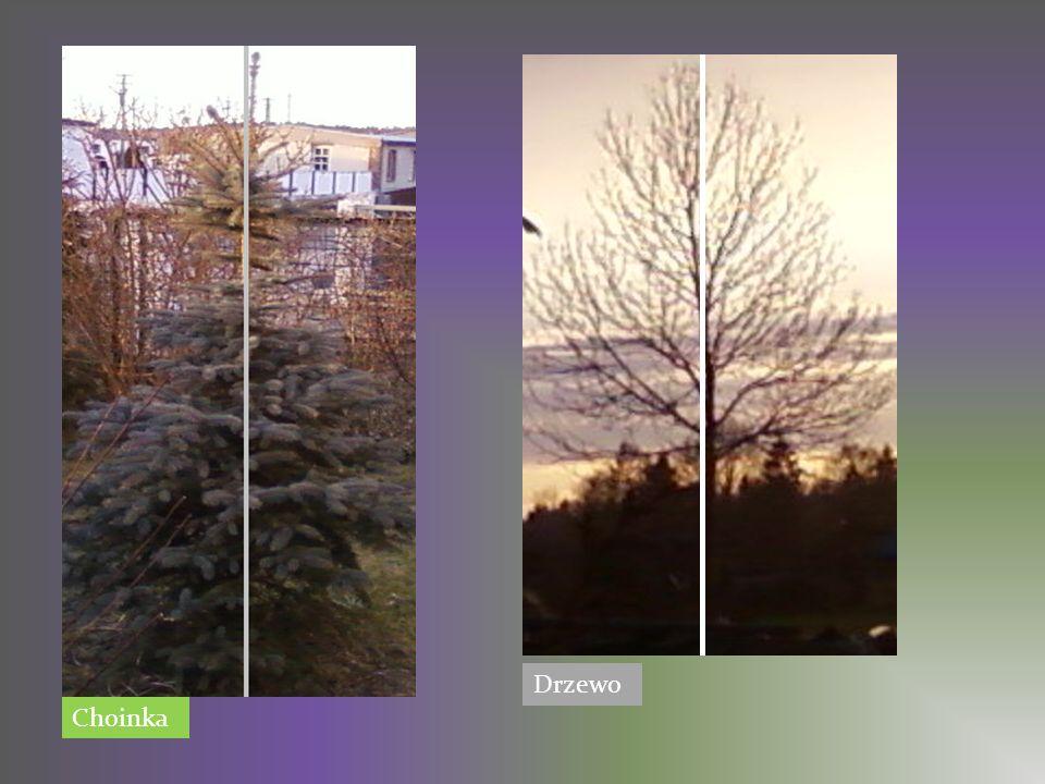 Choinka Drzewo