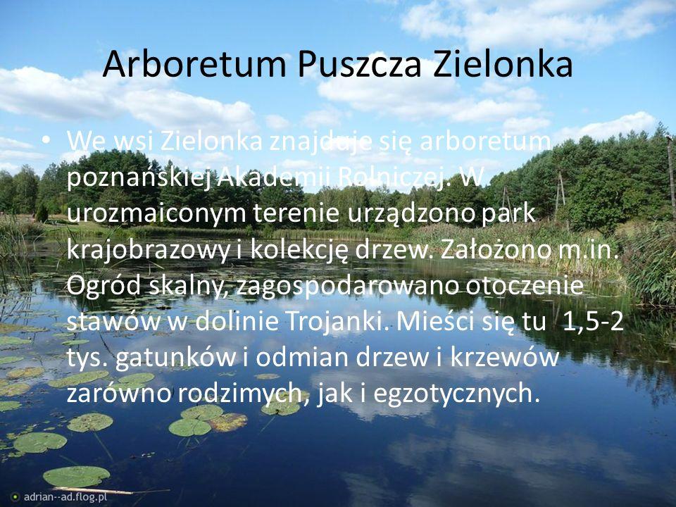 Arboretum Puszcza Zielonka We wsi Zielonka znajduje się arboretum poznańskiej Akademii Rolniczej. W urozmaiconym terenie urządzono park krajobrazowy i