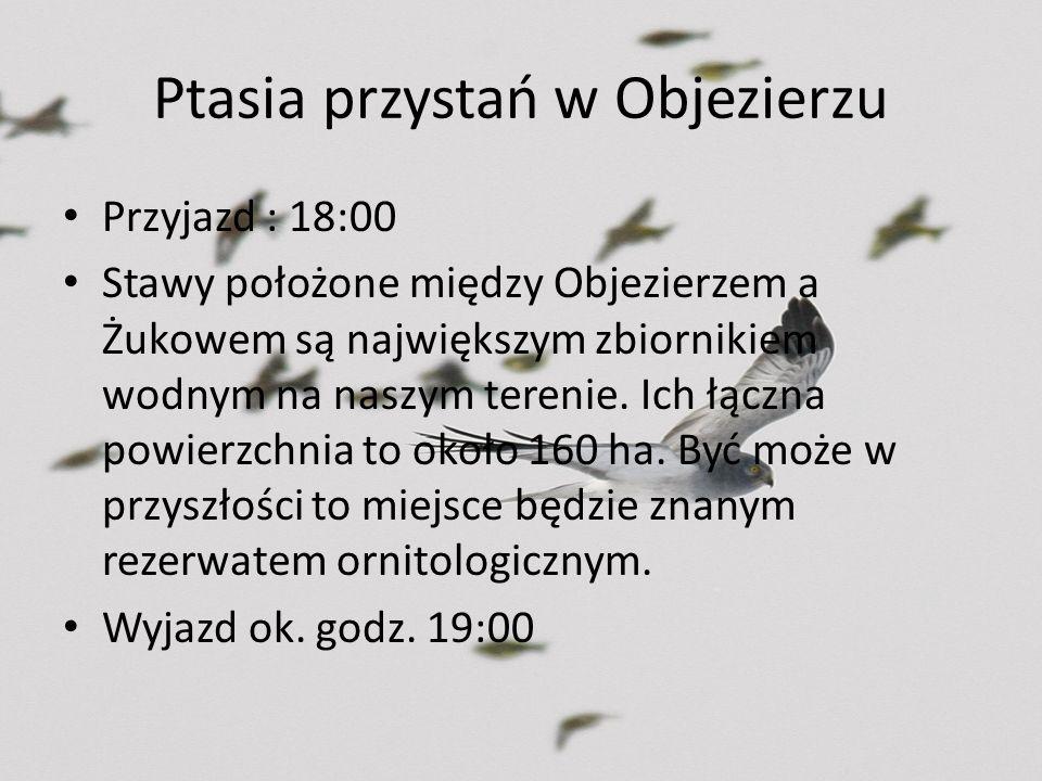 Ptasia przystań w Objezierzu Przyjazd : 18:00 Stawy położone między Objezierzem a Żukowem są największym zbiornikiem wodnym na naszym terenie. Ich łąc
