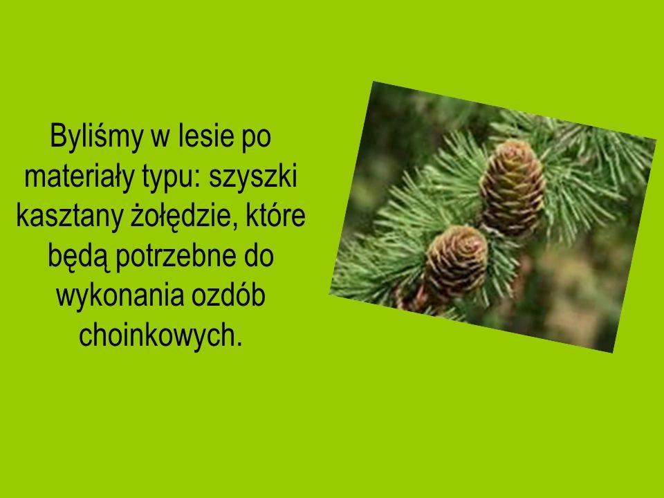 Byliśmy w lesie po materiały typu: szyszki kasztany żołędzie, które będą potrzebne do wykonania ozdób choinkowych.