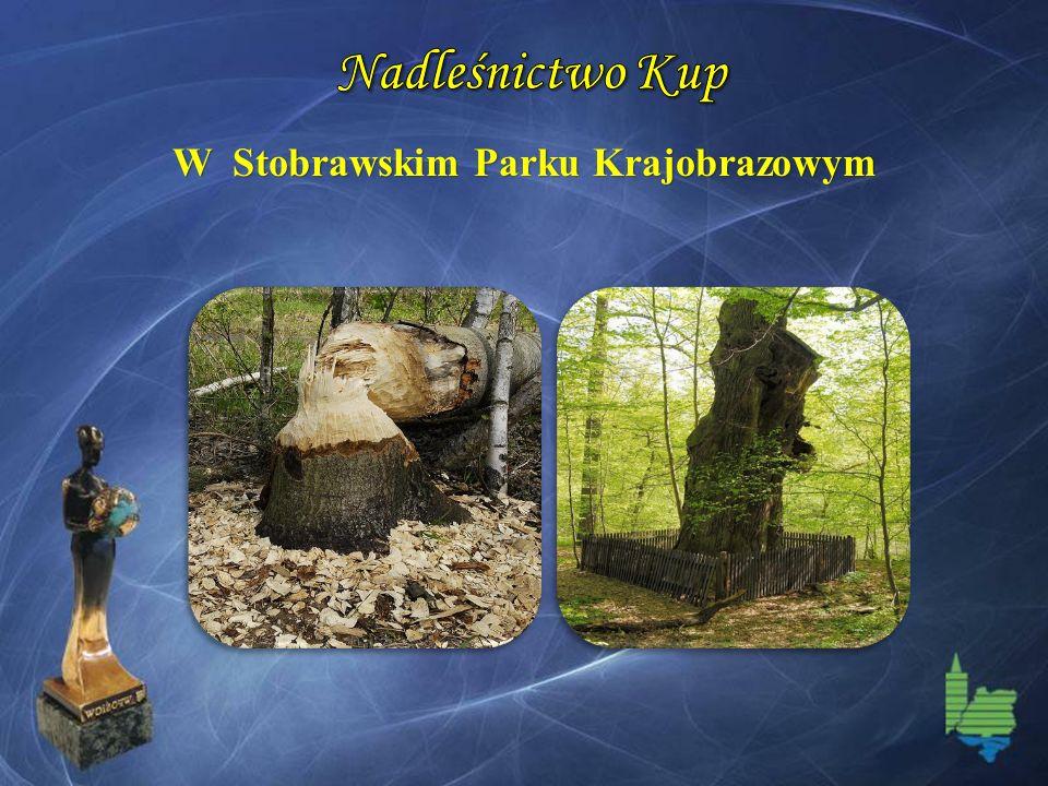 W Stobrawskim Parku Krajobrazowym