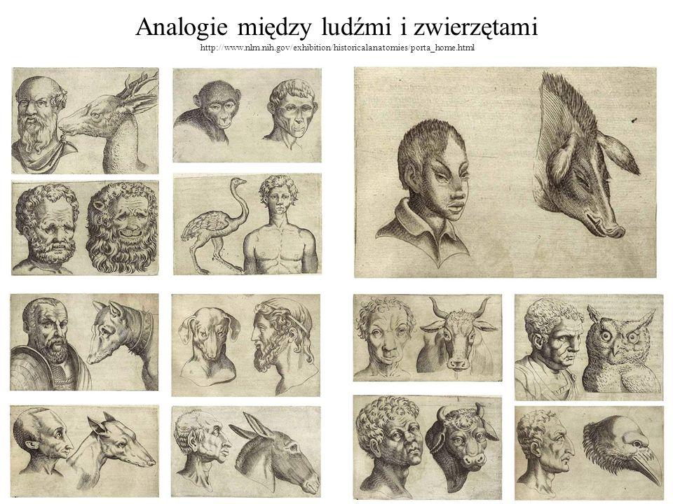 Analogie między ludźmi i zwierzętami http://www.nlm.nih.gov/exhibition/historicalanatomies/porta_home.html