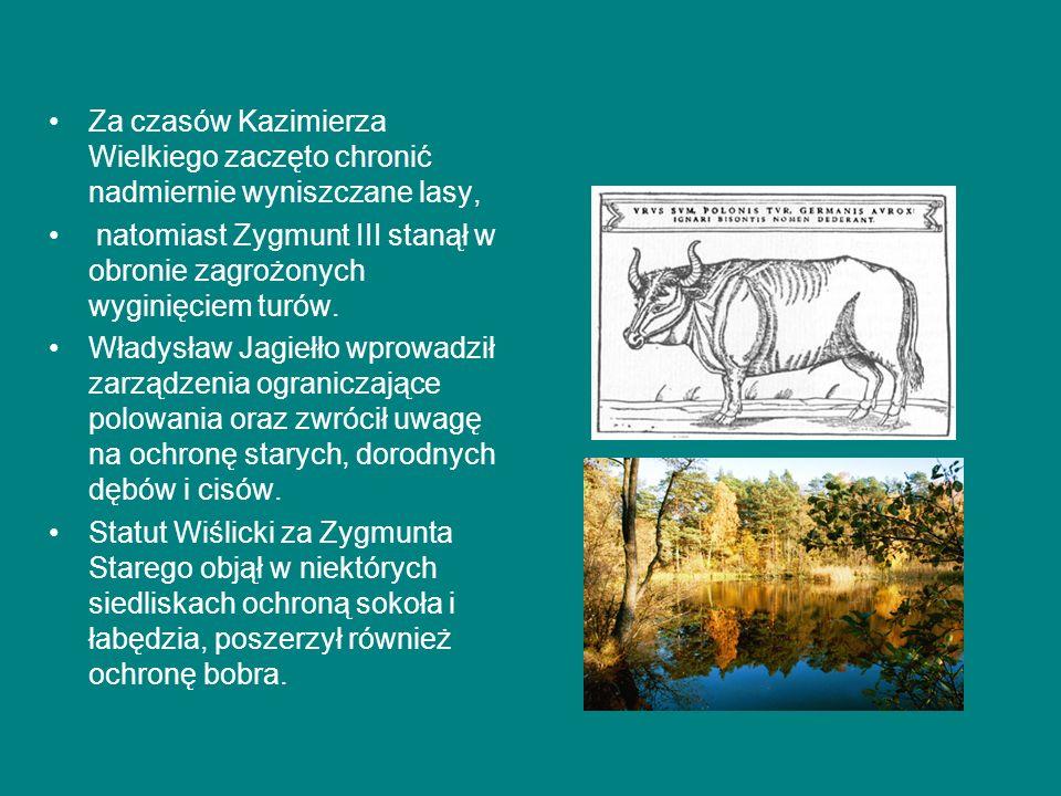 Za czasów Kazimierza Wielkiego zaczęto chronić nadmiernie wyniszczane lasy, natomiast Zygmunt III stanął w obronie zagrożonych wyginięciem turów.