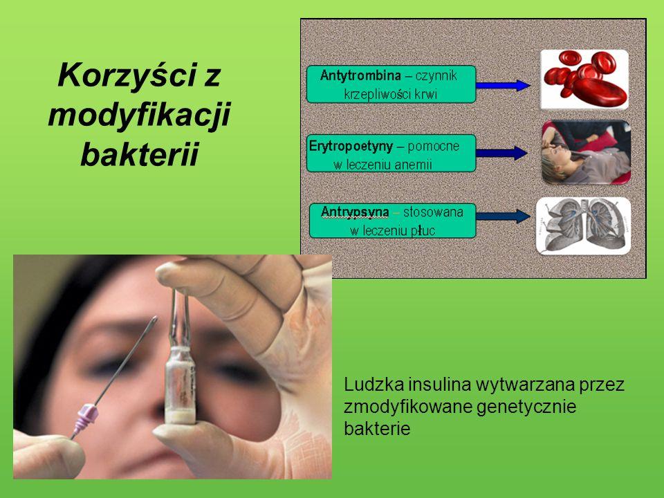 Korzyści z modyfikacji bakterii Ludzka insulina wytwarzana przez zmodyfikowane genetycznie bakterie