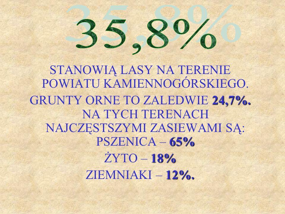 STANOWIĄ LASY NA TERENIE POWIATU KAMIENNOGÓRSKIEGO. 24,7%. 65% GRUNTY ORNE TO ZALEDWIE 24,7%. NA TYCH TERENACH NAJCZĘSTSZYMI ZASIEWAMI SĄ: PSZENICA –