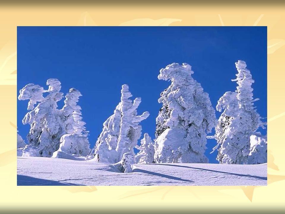 Rodzaje śniegu Śnieżyca – obfite opady śniegu.Śnieżyca – obfite opady śniegu.