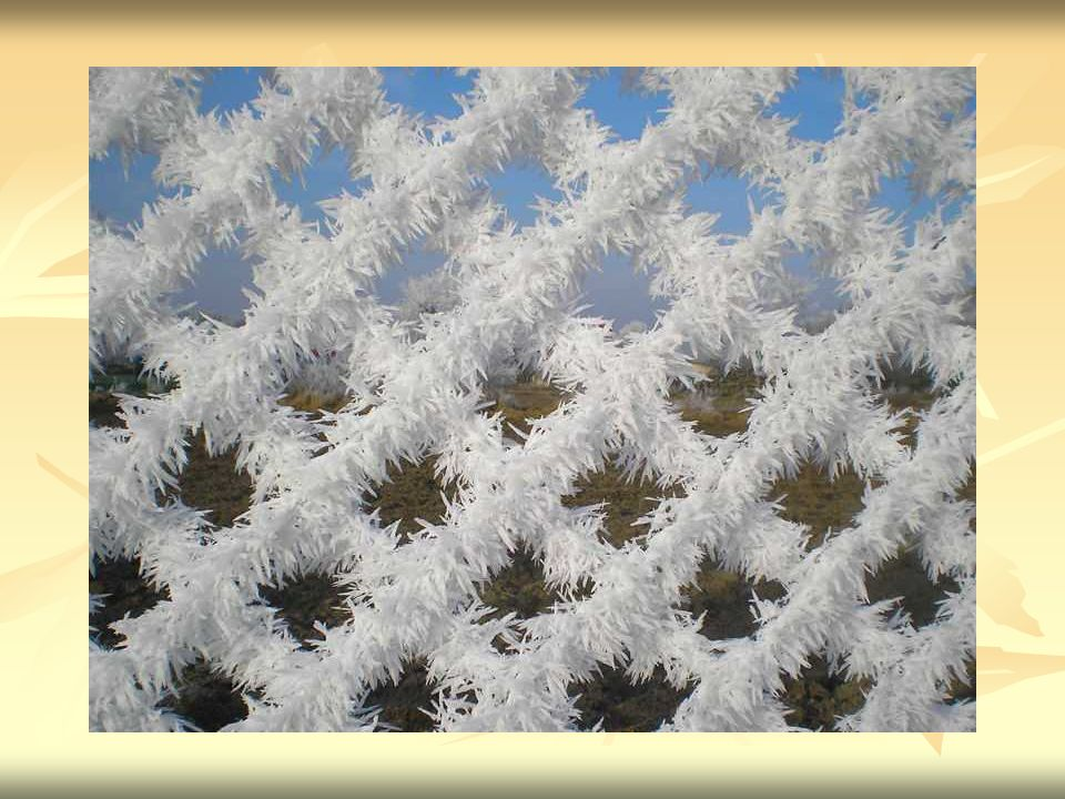 Szadź Też sadź - osad lodu powstający przy zamarzaniu małych, przechłodzonych kropelek wody (mgły lub chmury) w momencie zetknięcia kropelki z powierzchnią przedmiotu lub już narosłej szadzi.