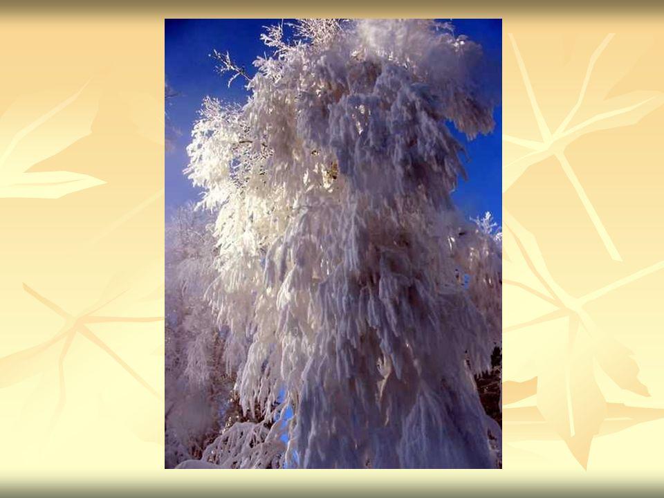 Mgła Mgła - krople wody (lub kryształy lodu) zawieszone w powietrzu, których dolna podstawa styka się z powierzchnią ziemi.