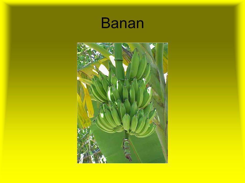 Warzywa i owoce powinny być spożywane 3-5 razy dziennie. Są bogatym źródłem witamin (zwłaszcza witaminy C oraz beta-karotenu i innych karotenoidów), s