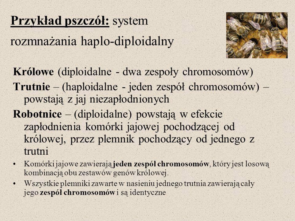 Przykład pszczół: system rozmnażania haplo-diploidalny Królowe (diploidalne - dwa zespoły chromosomów) Trutnie – (haploidalne - jeden zespół chromosom