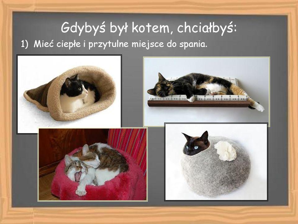 Gdybyś był kotem, chciałbyś: 1) Mieć ciepłe i przytulne miejsce do spania.